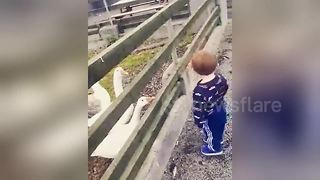 Angry goose teaches toddler a lesson