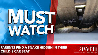 Parents find a SNAKE hidden in their child's car seat - Video