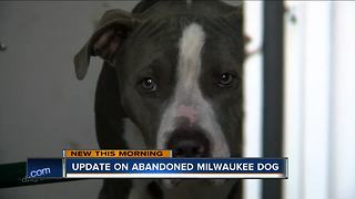 Milwaukee dog left abandoned for days now available for adoption - Video