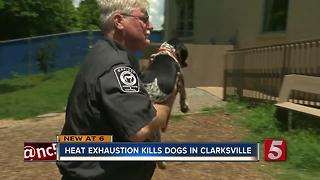 3 Dogs Die Of Heat Exhaustion In Clarksville