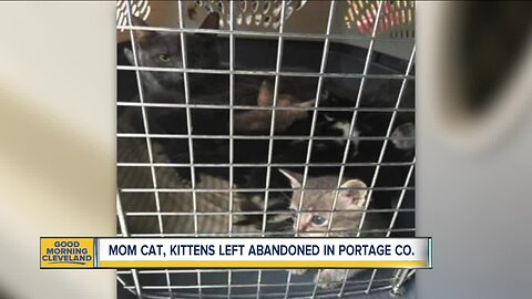 8 kittens, mother cat found thrown in trash in Portage County