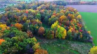 Drone Captures Autumn Leaves Changing Color - Video