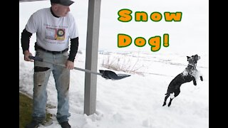Jumping Snow Dog Snow Day by Wapp Howdy