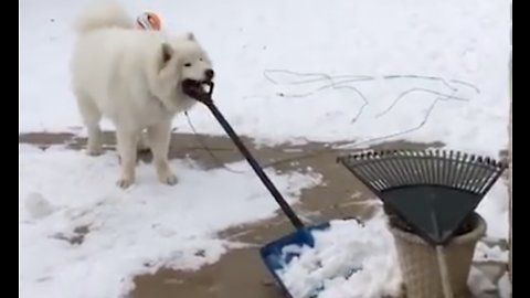 Dogs vs Snow Shovels
