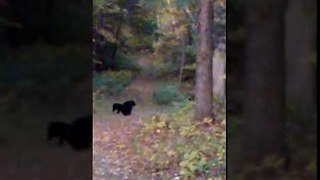 Extraordinary Video of Mother Bear Confronting Hikers - Video