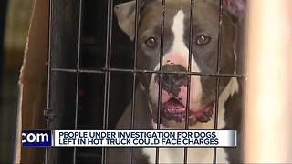 Other rescue groups responding after 17 dogs found abandoned in truck