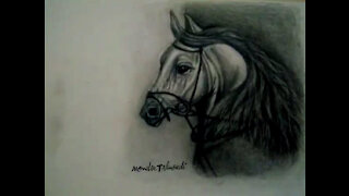 Horse Drawing Black and White