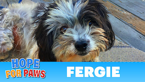 Surrounded by predators, Fergie survived alone in the mountains!