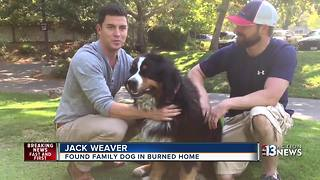 Family dog survives California wildfire - Video