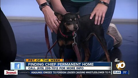 Pet of the Week: Cheif