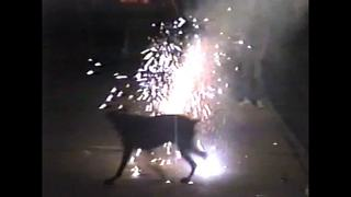 Big Black Dog Attacks The Fireworks On The 4th Of July - Video