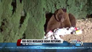 Arizona Game and Fish to kill nuisance bear - Video