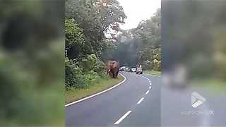Elephant Kills Security Guard On National Highway - Video