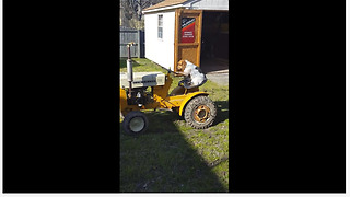 Dog drives lawnmower tractor with ease - Video