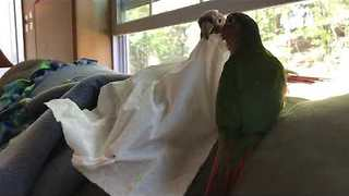 Birds Steal Tissue From Owner to Play - Video