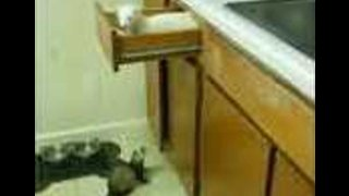 Toby the Ferret Pulls Off a Surprise Entrance
