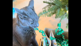 Cat Steals Ribbon From Christmas Gifts