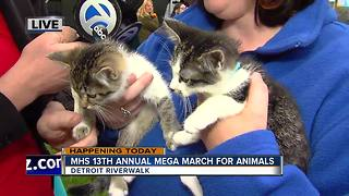 MHS Mega March For Animals