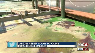 Plans move forward for algae cleanup - Video