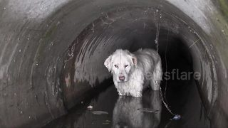 Dog rescued from drainage pipe in Romania - Video
