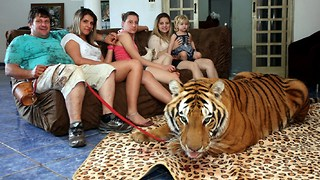Living With Tigers: Family Share Home With Pet Tigers - Video