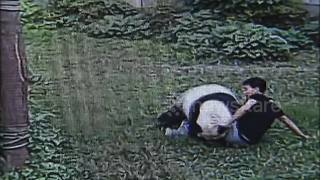 Man wrestles giant panda after jumping into zoo enclosure - Video