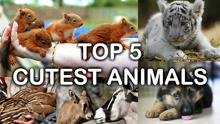 Top 5 Cutest Animals - Video