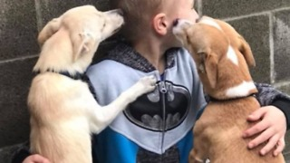 Little Boy Determined to Find Home for Washington Shelter Dogs - Video