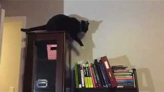 Adorable Kitty Chases Its Tail On Top of Cupboard - Video