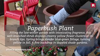 Porch winter blooming pot with Elissa the Mom | Rare Life - Video