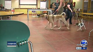 Fort Collins class teaches dogs good brewery manners
