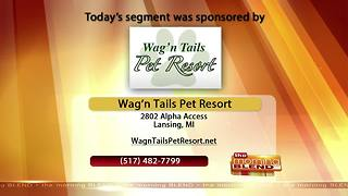Wag' n Tails Pet Resort - 11/20/17 - Video