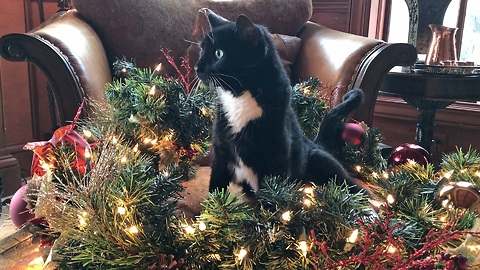 Funny Cat Inspects Christmas Decorations *