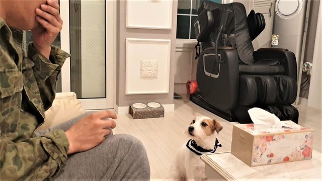 Jack Russell fetches tissue when owner sneezes - Video