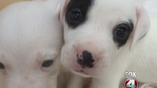 wedding puppies - Video