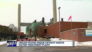 Possible human organ found at Detroit water treatment plant - Video