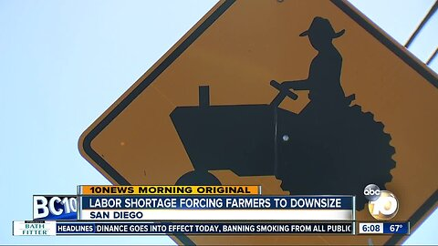 Labor shortage forcing San Diego-area farmers to downsize