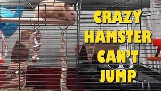 Crazy Hamster Can't Jump - Video