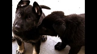 Dog Cops: Next generation - Video