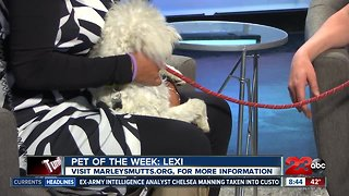 Pet of the Week: Lexi maltese mix - Video