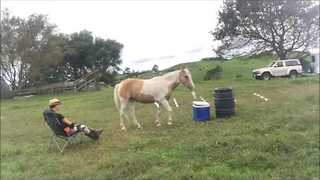 Clever Horse Fetches Drink For His Owner - Video