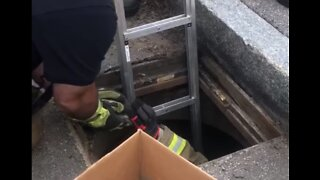 Manchester Firefighters Rescue Ducklings From Storm Drain