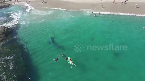 Gray Whale Appears Feet From Swimmers At Laguna Beach