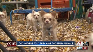 Owner of 7 dogs says pet limit unnecessary - Video