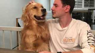 Louie the Golden Retriever Has a Whole Lotta Love to Give - Video
