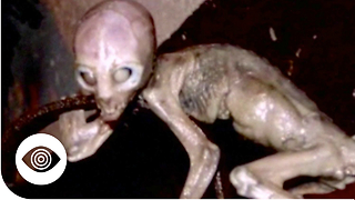 What Is Area 51 Hiding? - Video