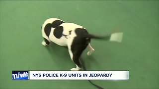 Expensive transition for police K-9 Departments with marijuana