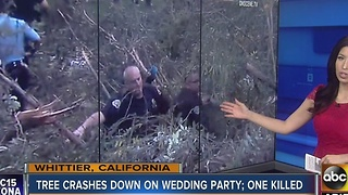 Tree crashes down on wedding party killing one person - Video