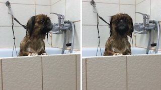 Wet doggy makes alien sounds waiting to get dried off