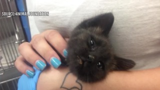 UPDATE: Rescued kitten placed with foster family
